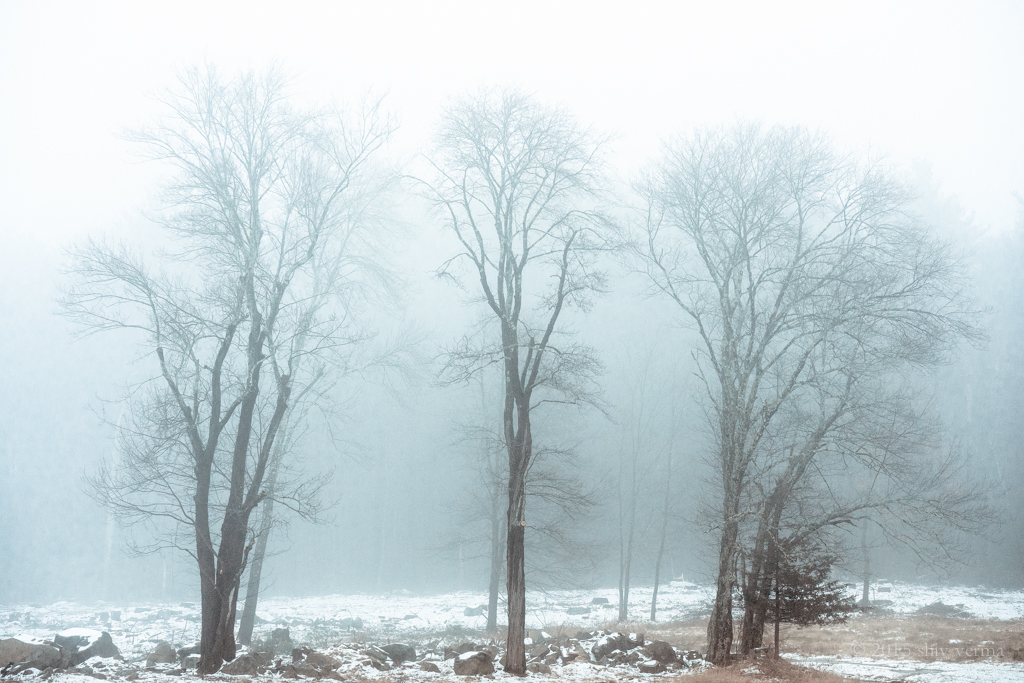 Three Trees In The Fog - Cold Toning Applied