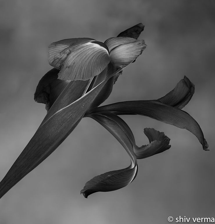 Iris Session-001-Edit-Edit-2.jpg